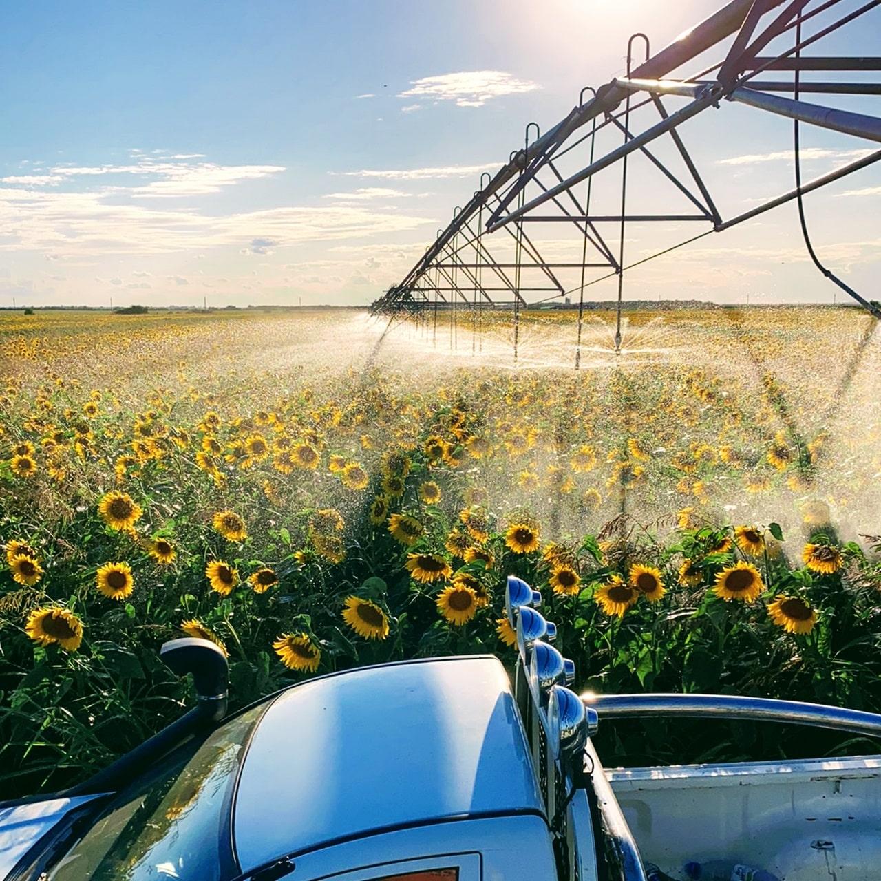 Cooperare internațională și transfer tehnologic în domeniul produselor ecologice – 6 octombrie 2021, ora 10:00 – Strada Autostrăzii Nr. 4, Ștefan cel Mare 917245, Călărași  –